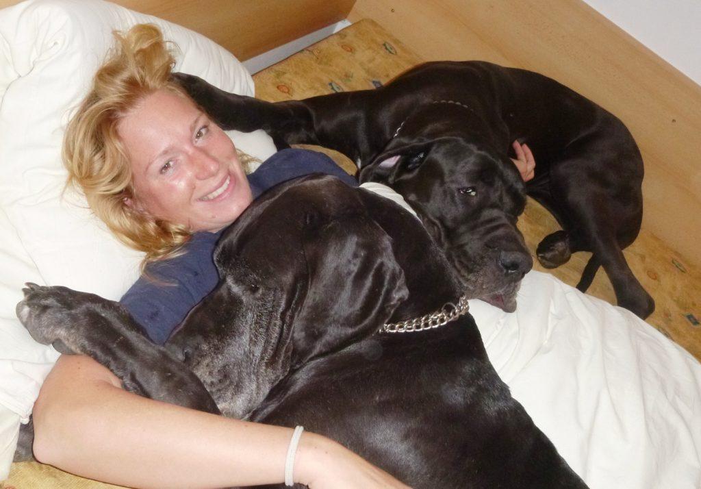 naše německé dogy užívají výživové doplňky pro psy na klouby ProArtLeg Maxy a MultiAdapt